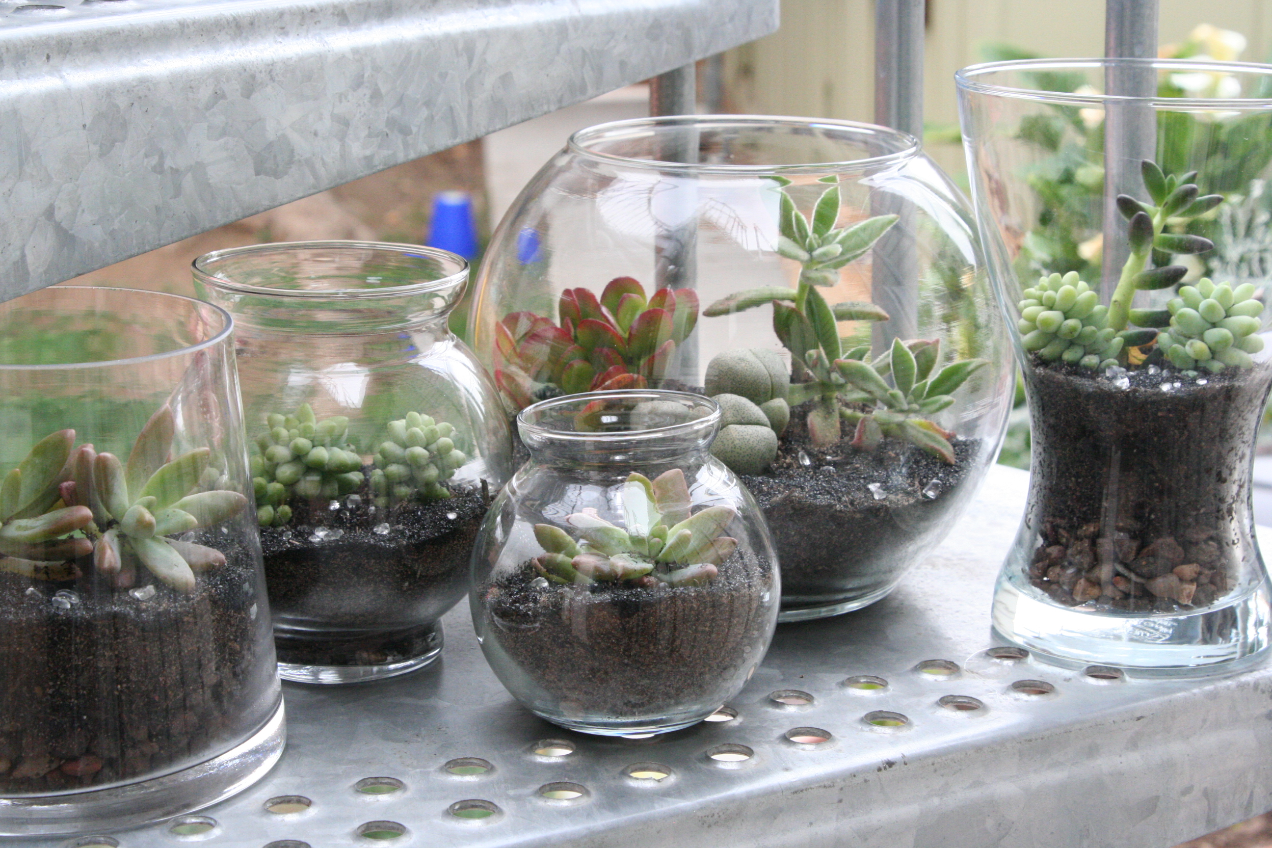 Terrarium Obsession Fire And Flowers